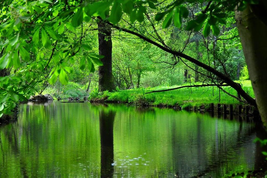 Nature-at-its-prime-in-the-Bois-de-Vincennes-park