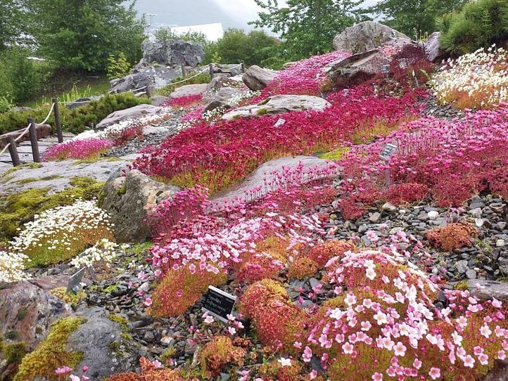 Arctic-Alpine Botanical Garden
